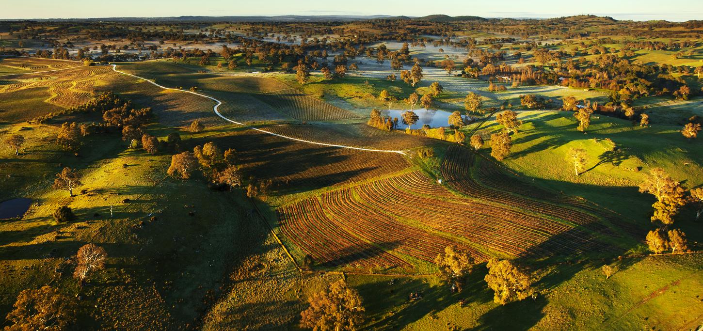 Eden Valley's founding vineyard:  Pewsey Vale Vineyard.