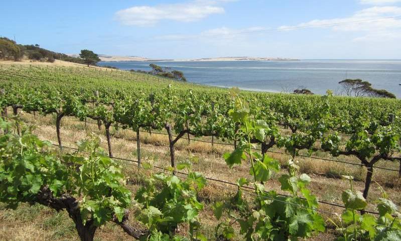 Coastal vineyard on Kangaroo Island.