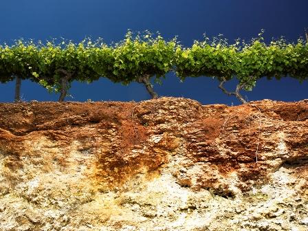 Coonawarra's famous 'Terra Rossa' soil over Limestone Ridges.