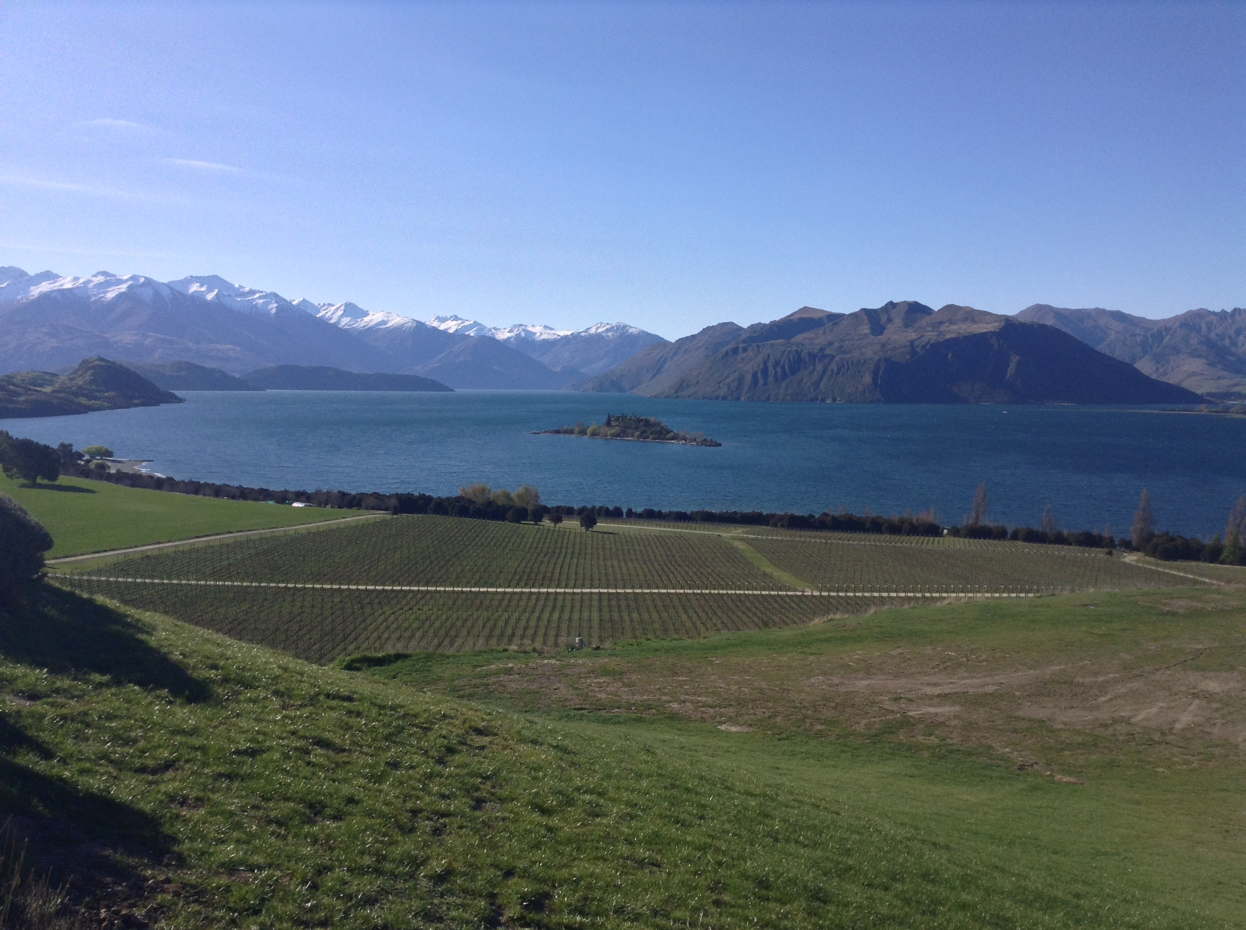 Tinker's Field during early Spring, with Lake Wanaka and Ruby Island framed by snow-capped Southern Alps.
