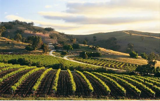 Bethany Wines  in Barossa Valley