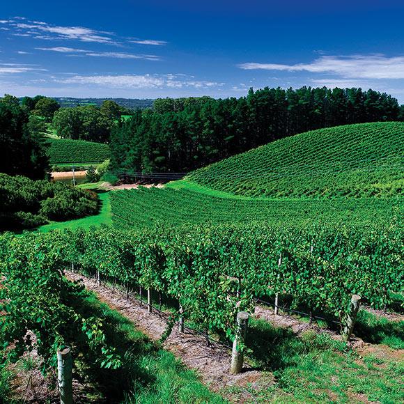Penfold's Adelaide Hills Vineyards