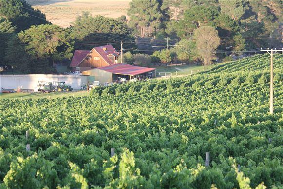 Vineyard in Nangkita, Southern Fleurieu