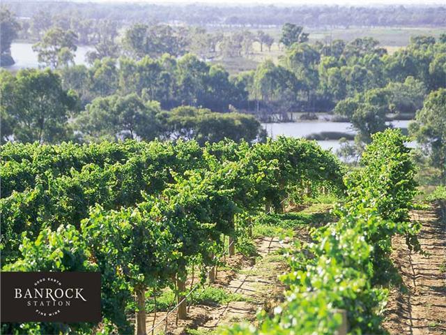 Banrock Station's  vineyard, adjacent to the Murray River