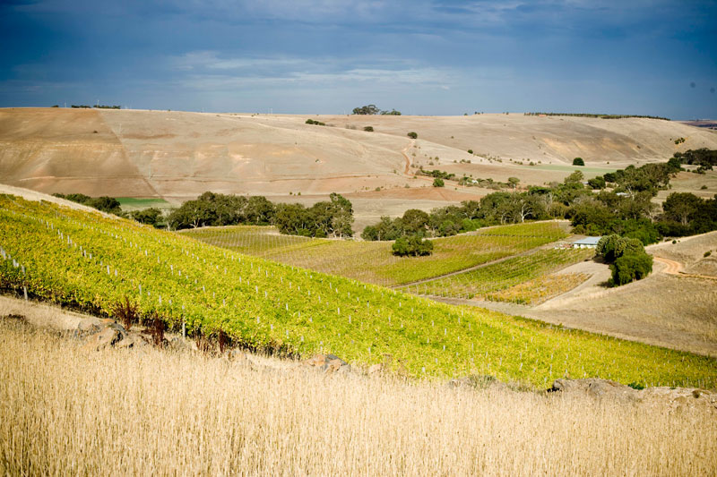 Clyde Park Vineyard  in the drier continental areas of Moorabool Valley, Geelong