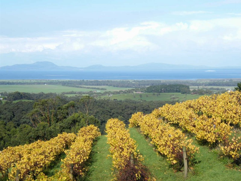 Windy Ridge Vineyard  , Southern Gippsland