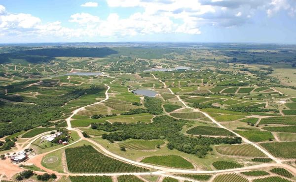 The vineyards that have suddenly exploded in size in Maldonado. Plantings by  Bodega Garzón