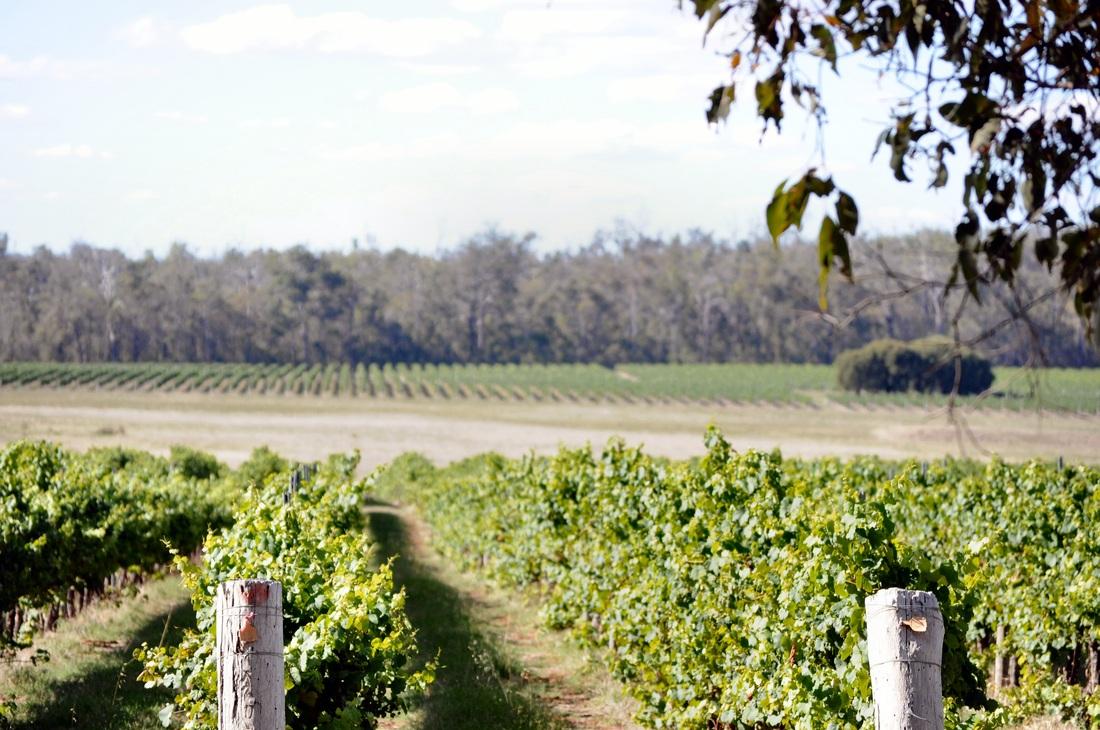 Chestnut Grove Winery  - Manjimup
