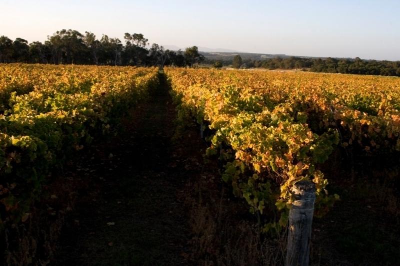 Wignalls Vineyard  - Albany