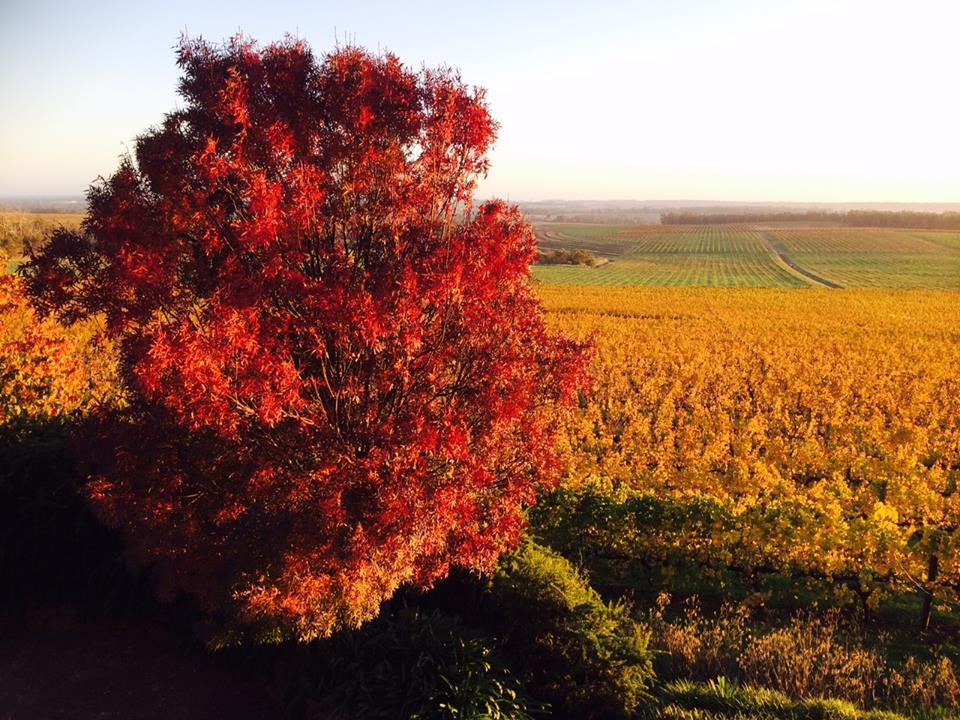 Ferngrove Wines  - Frankland River