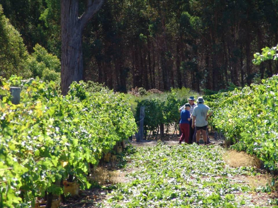Shedley Wines  - Blackwood Valley