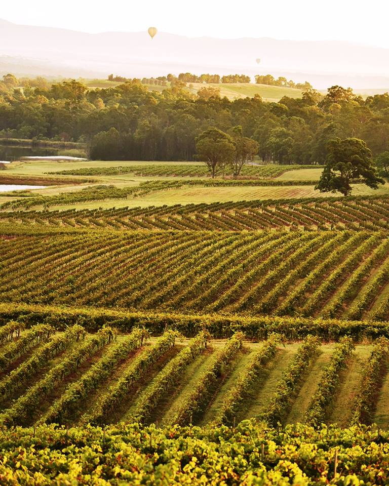 Audrey Wilkinson Vineyards