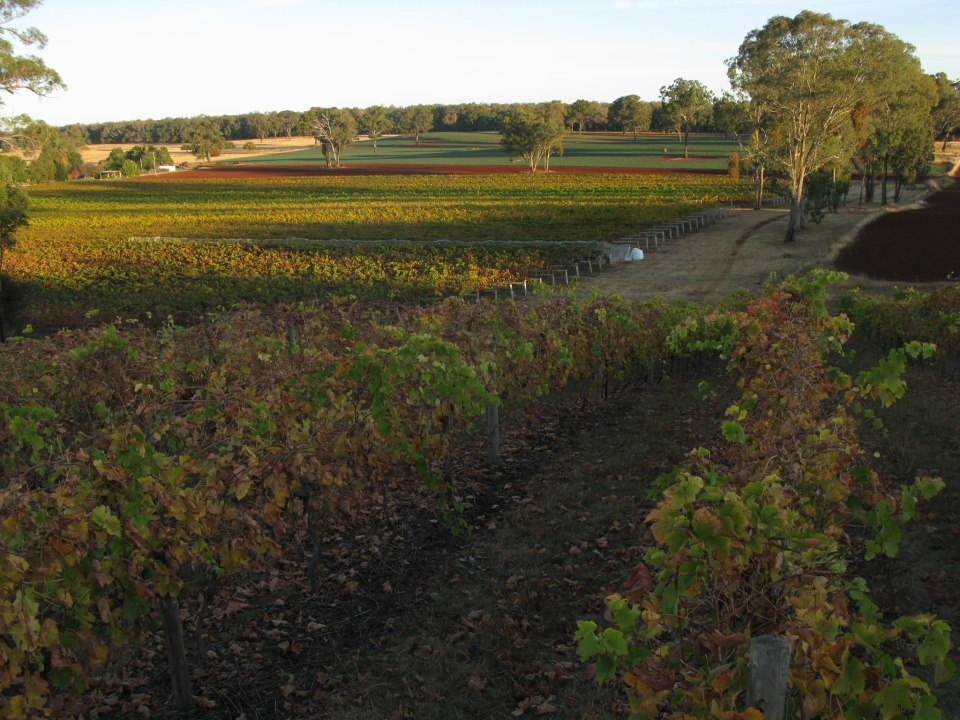 Acclaimed  Topper's Mountain Vineyard  - New England