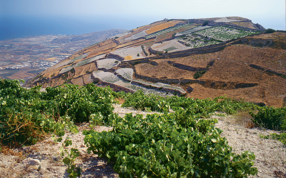 Incredible hillside vineyards of Santorini