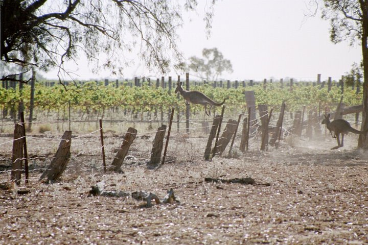 Canonbah Bridge Wines  - Western Plains