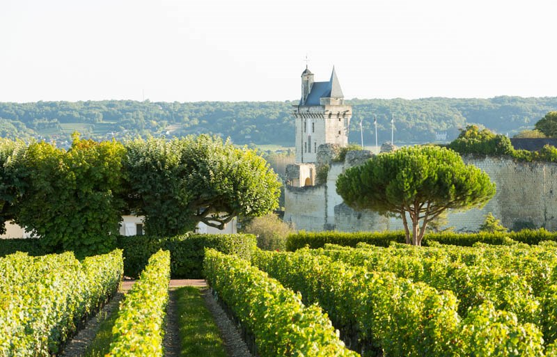 Loire vineyards