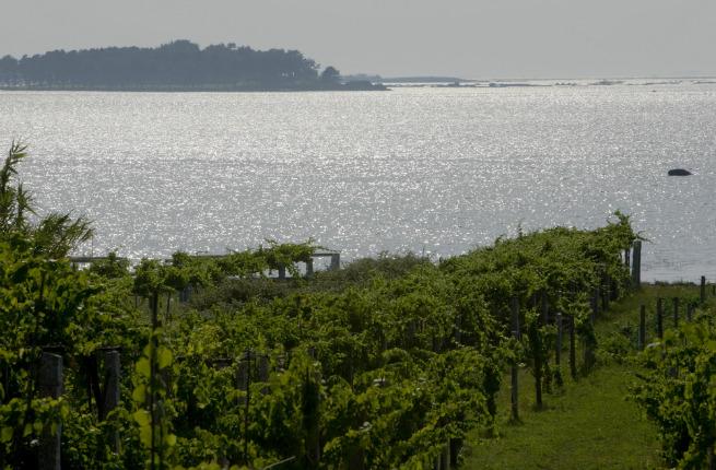 Seaside vines in Rias Baixas