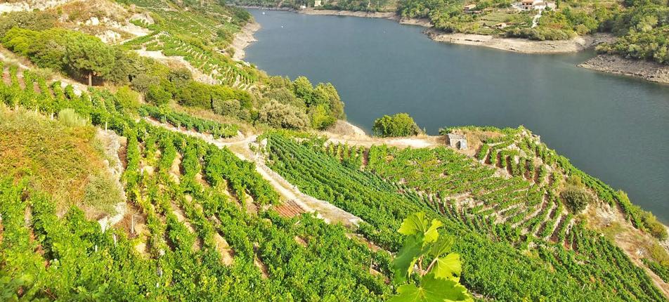 Riverside vineyards in Galicia