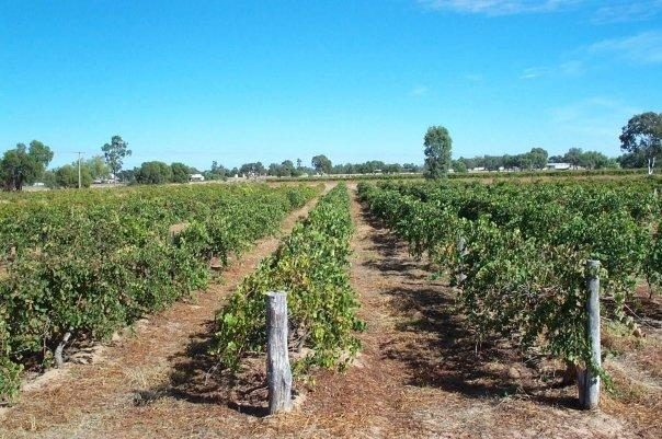 Romavilla  vineyards, Western Downs
