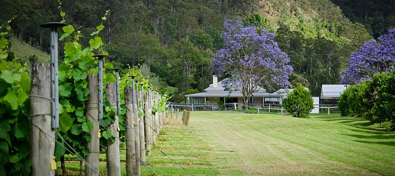 hinterland-rainforest-gold-coast-wine-winery-springbrook.jpg