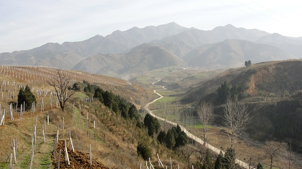 Jade Valley vineyards , Qingling Mountains, Shaanxi