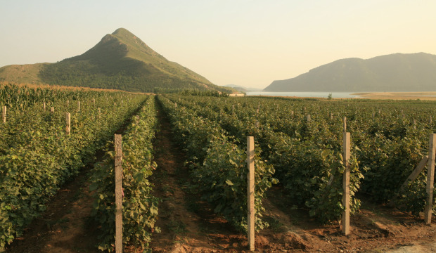Dynasty vineyards - Tianjin