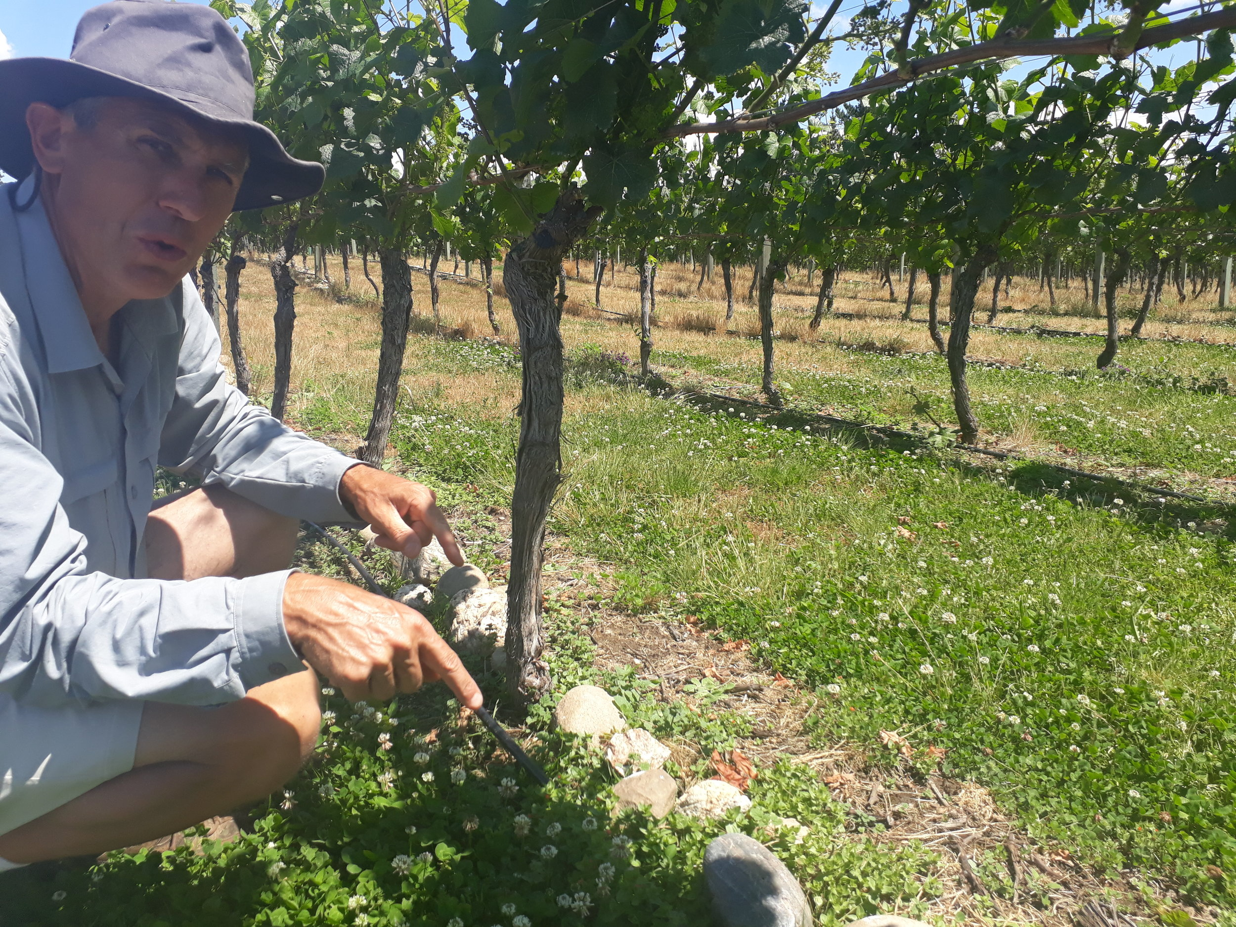 Paul Keast showing off the rocks of his vineyard with a green patch visible as water naturally flows down the slope.
