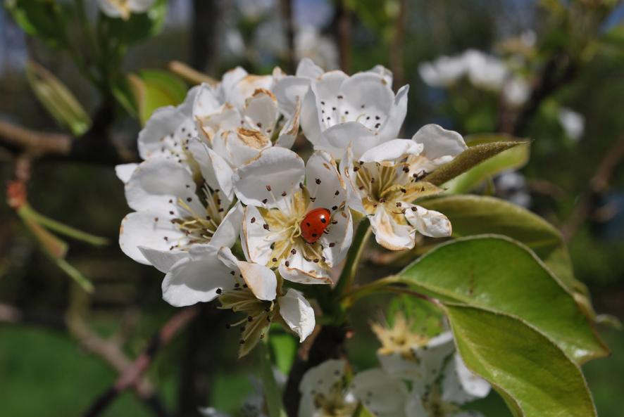 Blossom3.jpeg