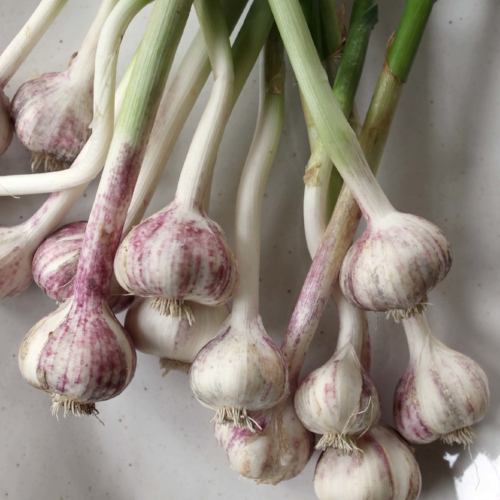 a-new-pastoral-recipe-garlic-and-herb-butter