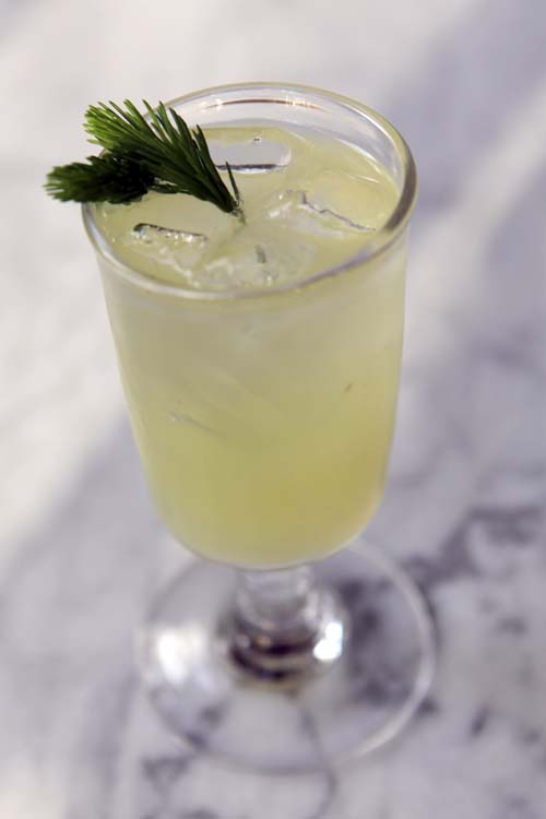 Recipe for spruce tip soda