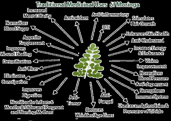 medicinal-benefits-moringa2_grande.png