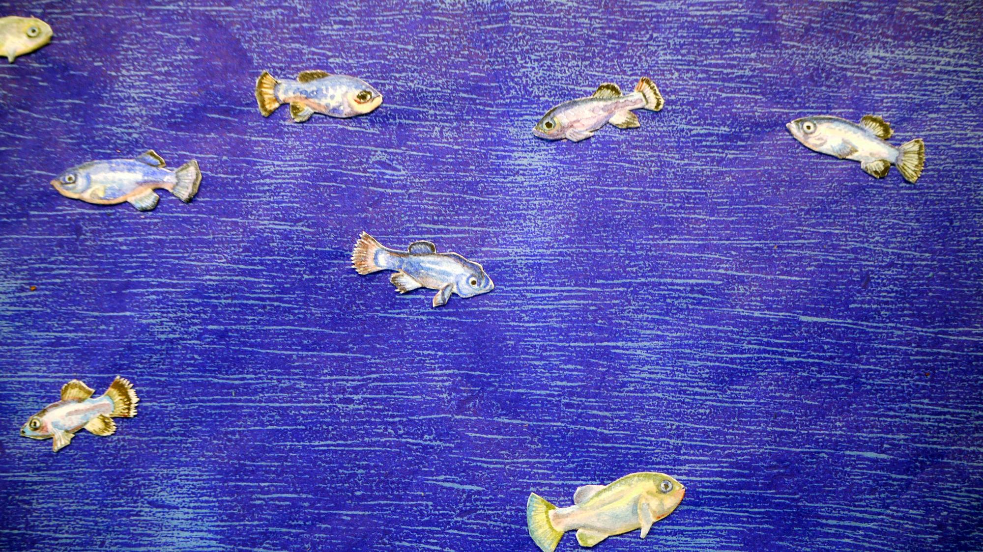 Devil's Hole Pupfish (detail)