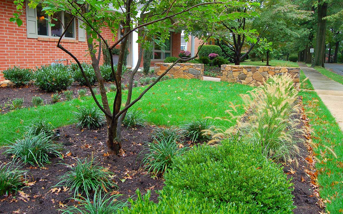 Landscape design with trees and water feature