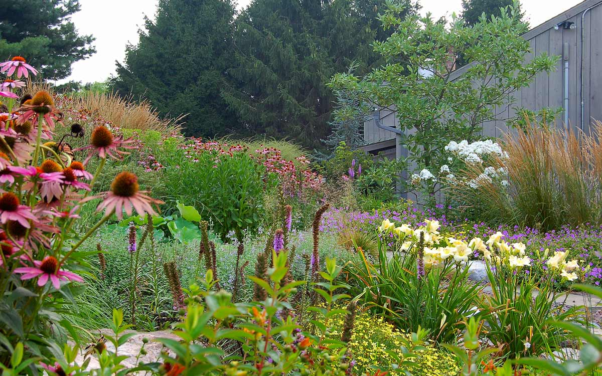 Perennial gardens with colorful coneflower