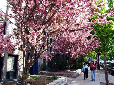 fruit-street-trees-montreal.jpg