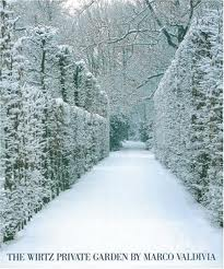 wirtz carpinus snow.jpg