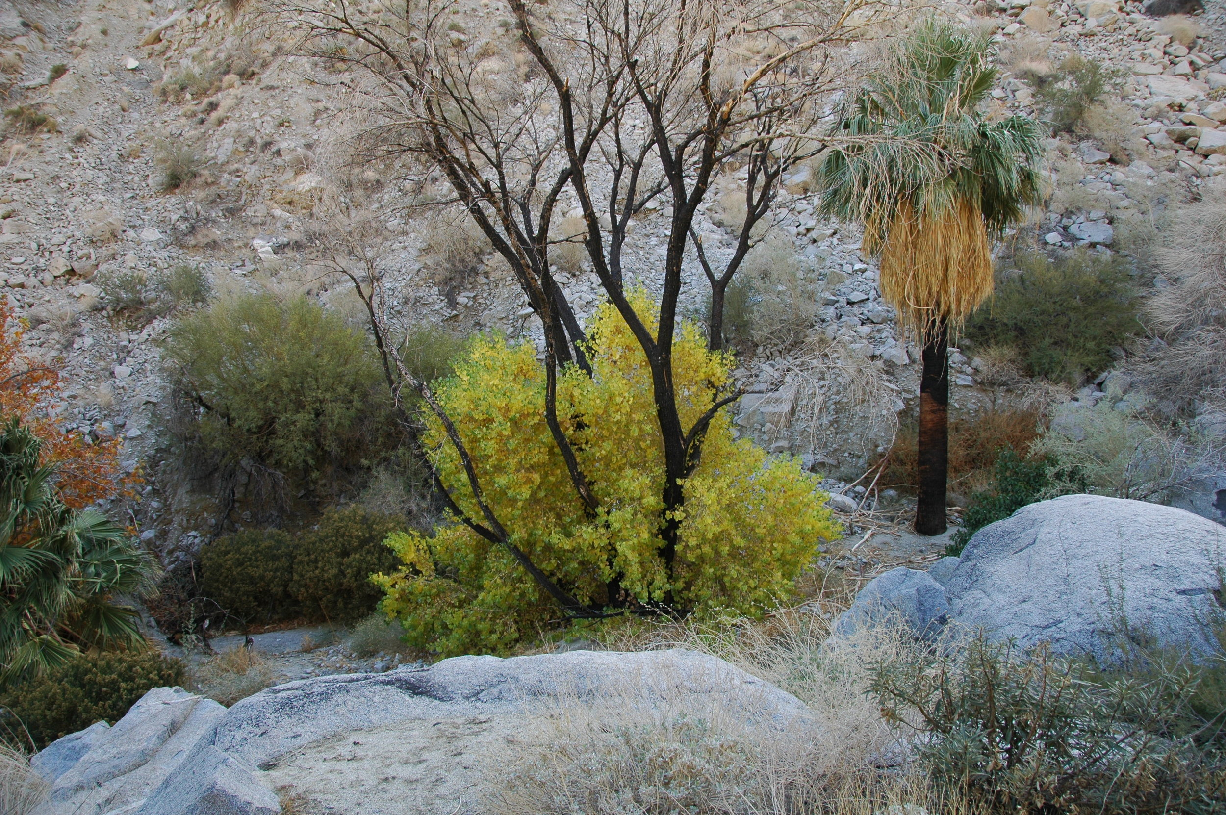 Palm Canyon, after the rains.