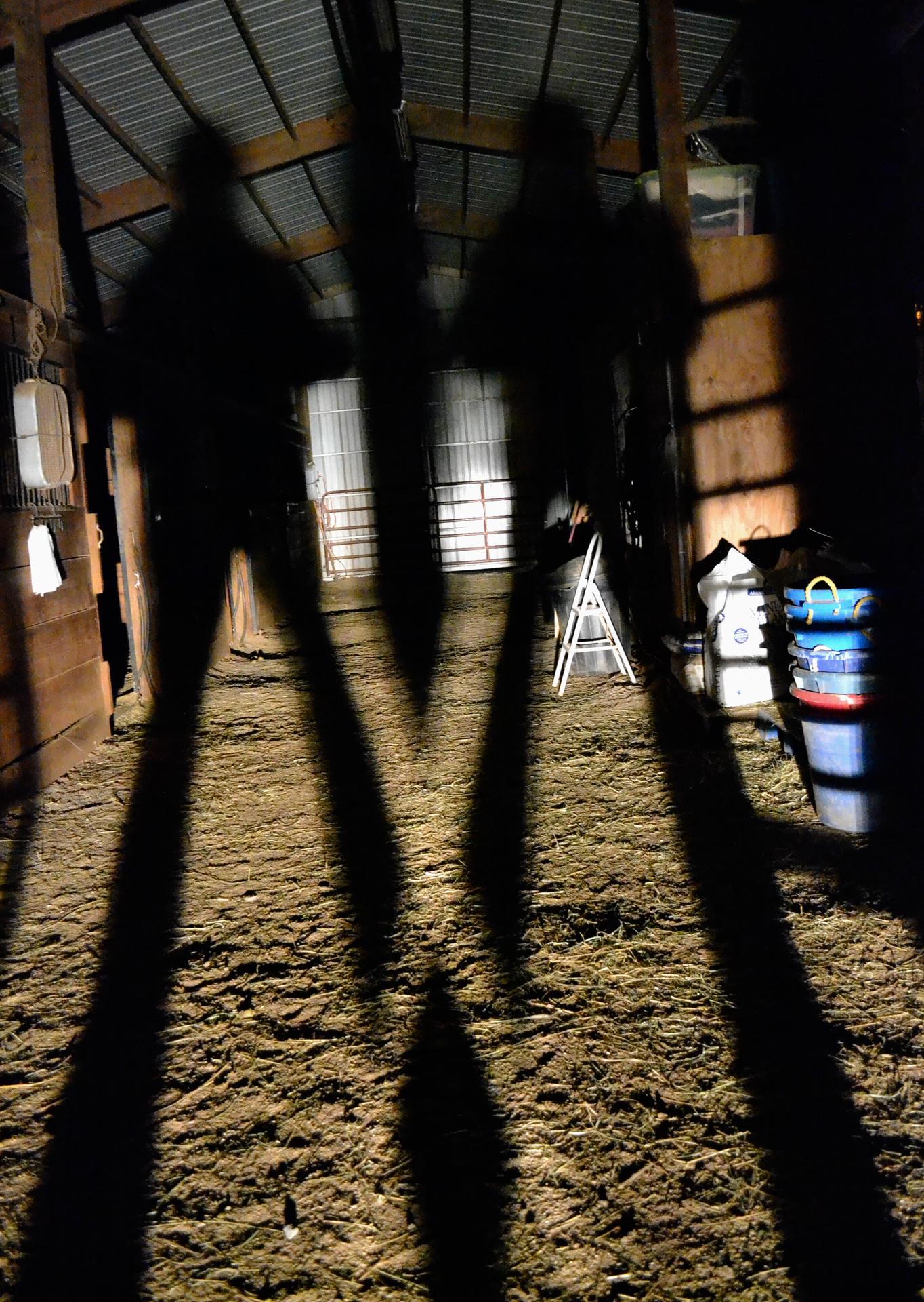 Shadowed Figures
