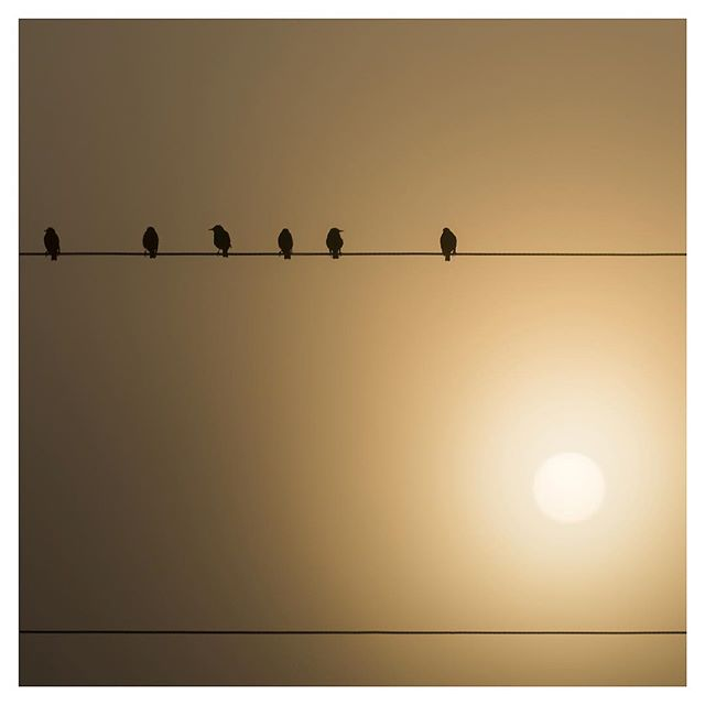 Birds on a Wire, Pennsylvania, 2015
