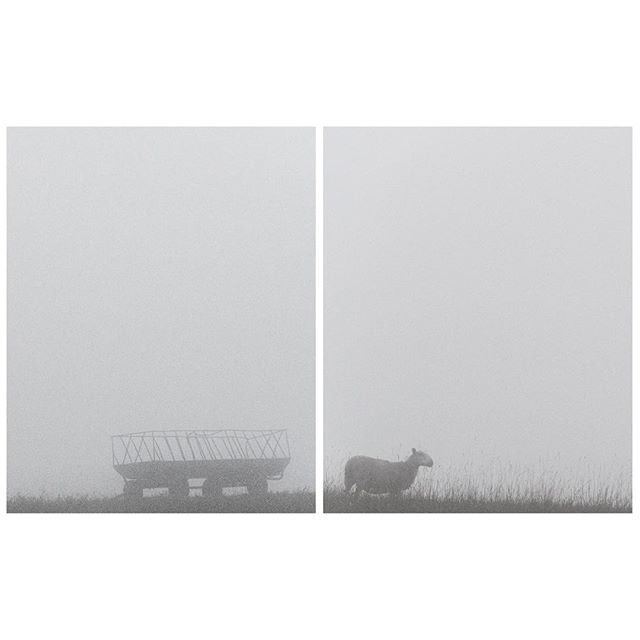 Lonely Things in Fields (Cart and Sheep in Fog) Pennsylvania 2015