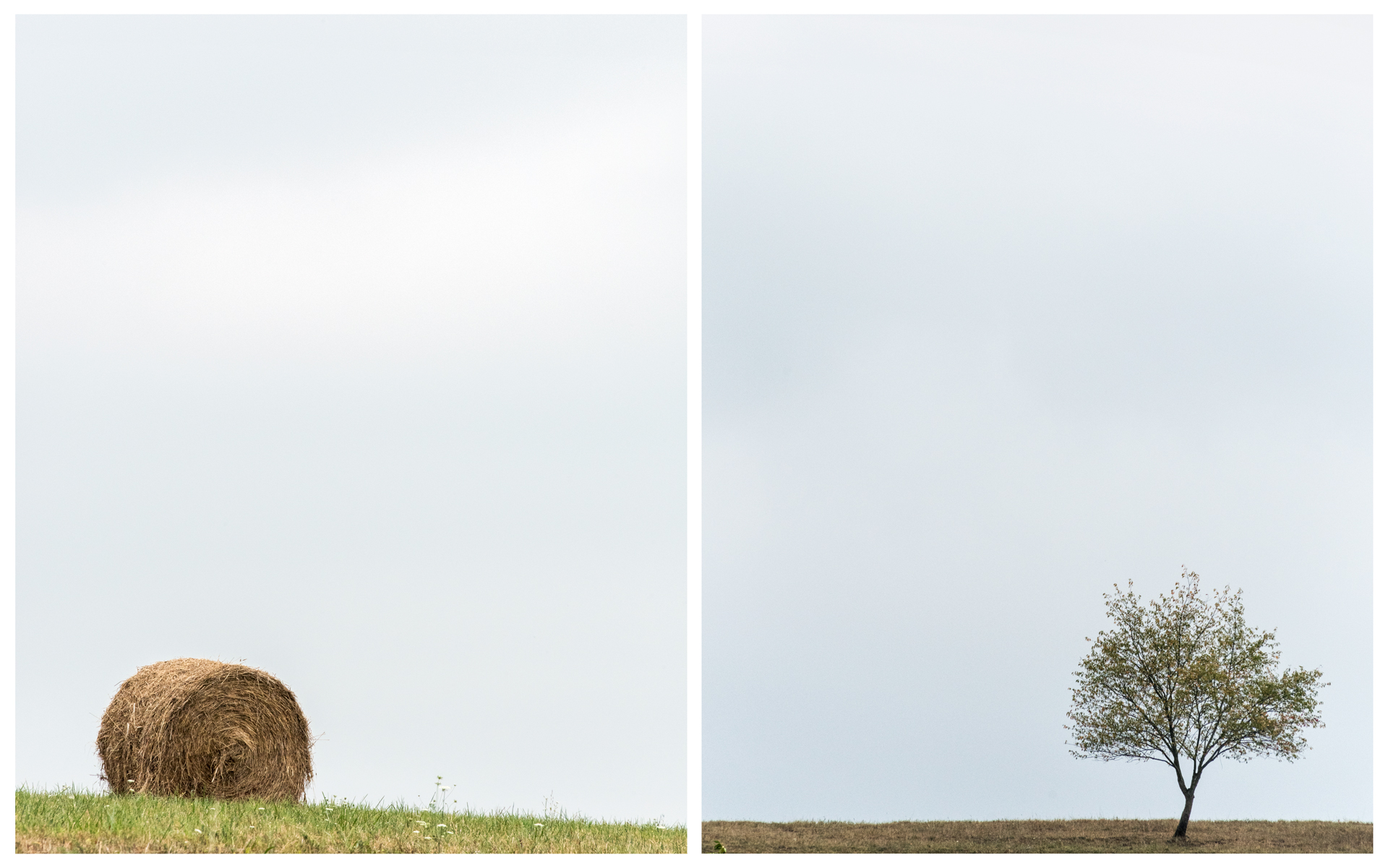 Hay Bale and Tree