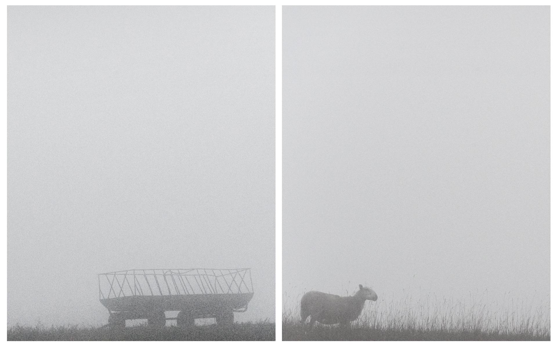 Cart and Sheep