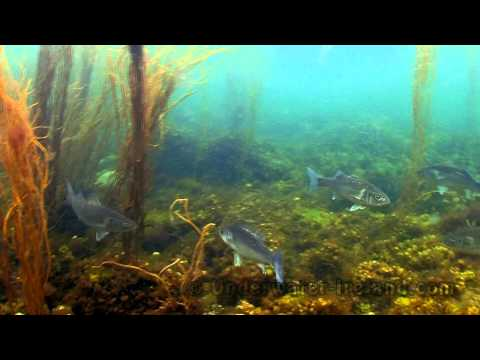 Snorkelling Ireland