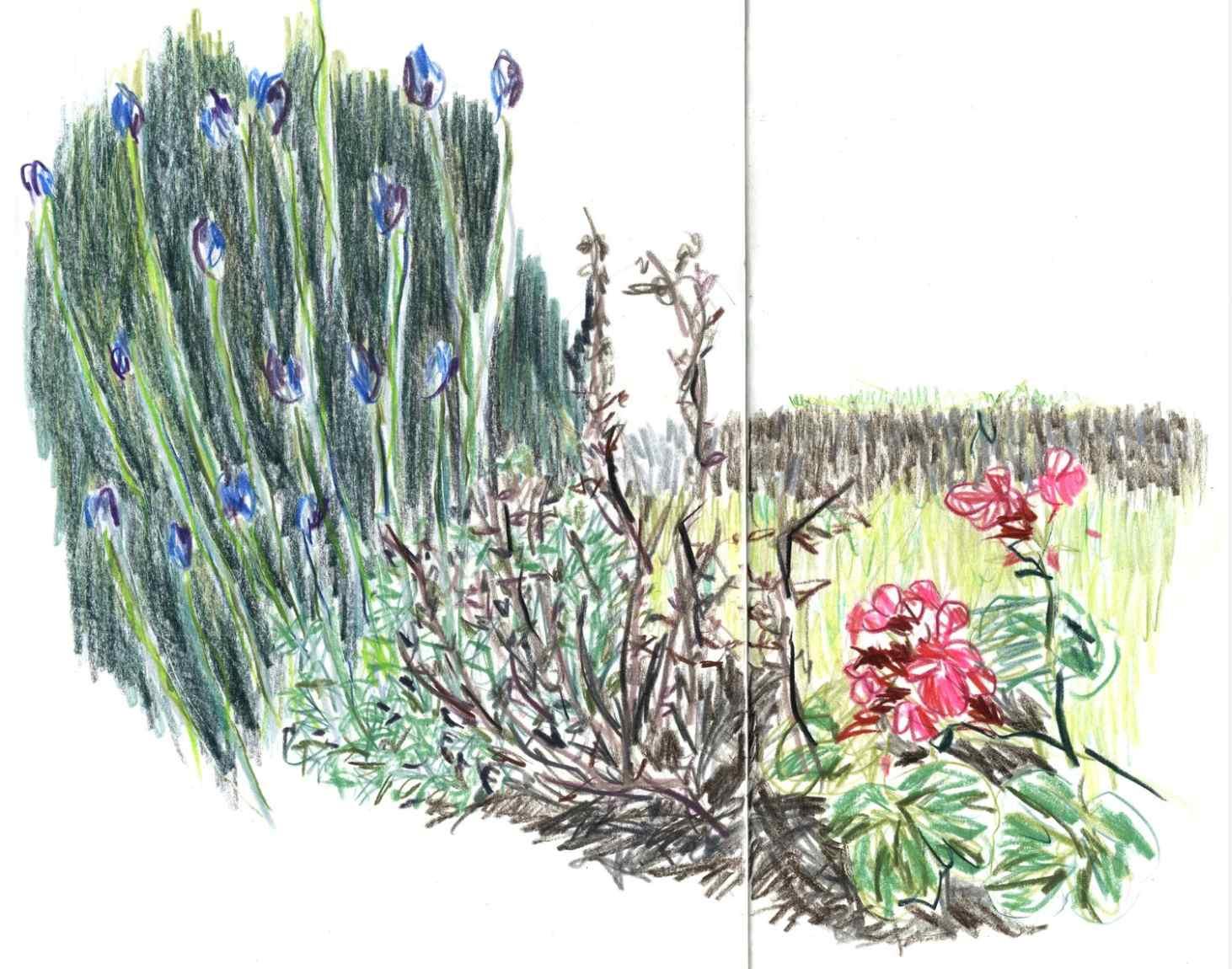 Jardin des Plantes , 2010 crayons on paper,sketchbook 59,4 x 42 cm