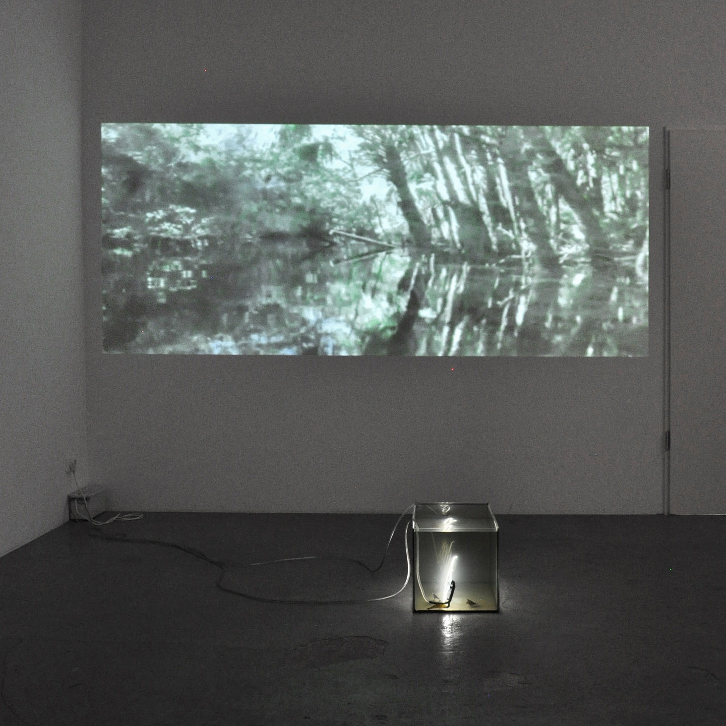 Junglespree , 2013 video, loop, 10:10min   White noise , 2013 sound, loop, 3:45min