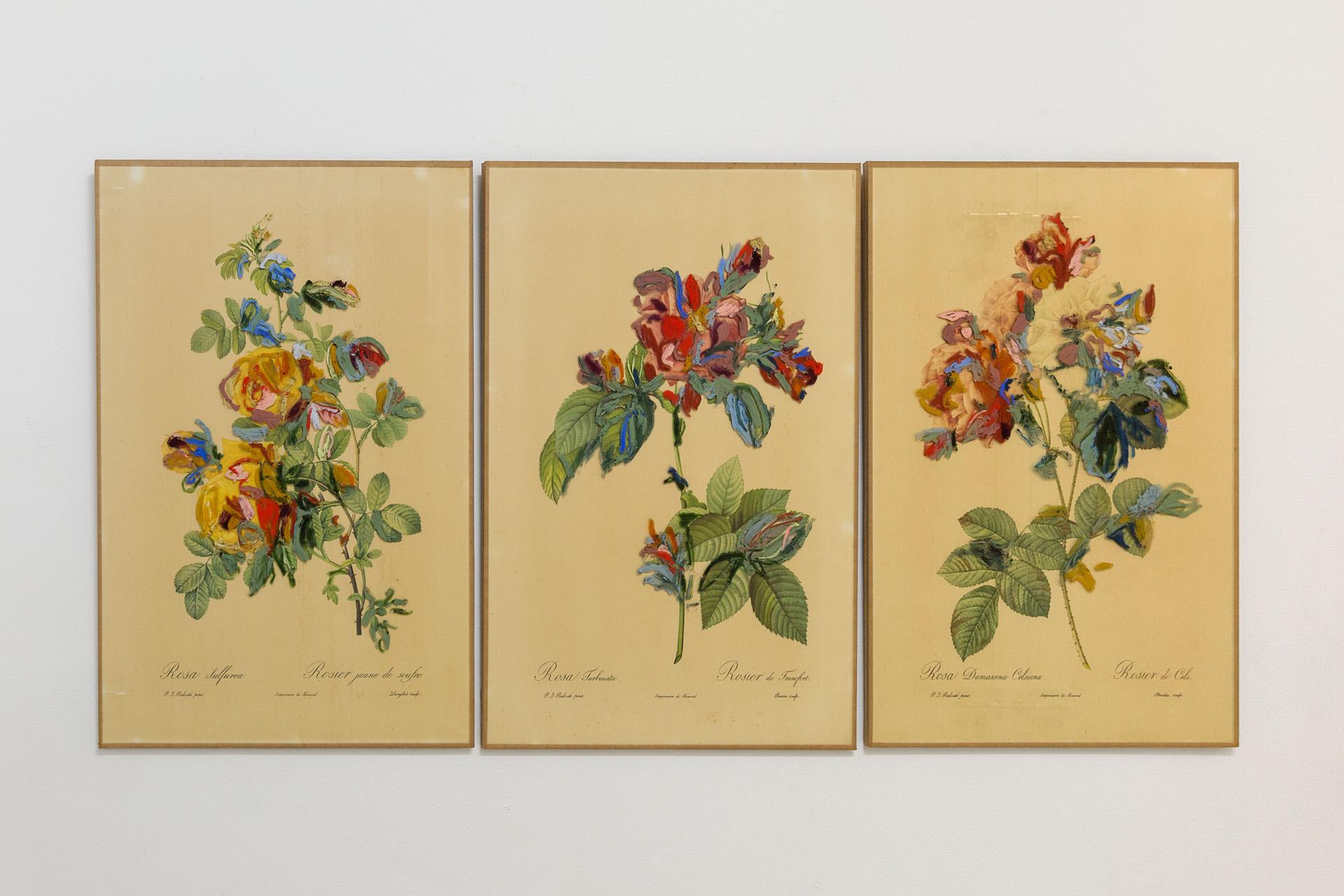 Rosa, Rosam, Rosae , 2017 oil on glass, vintage print, set of three 40,5 x 29 cm each  photo © Romain Darnaud