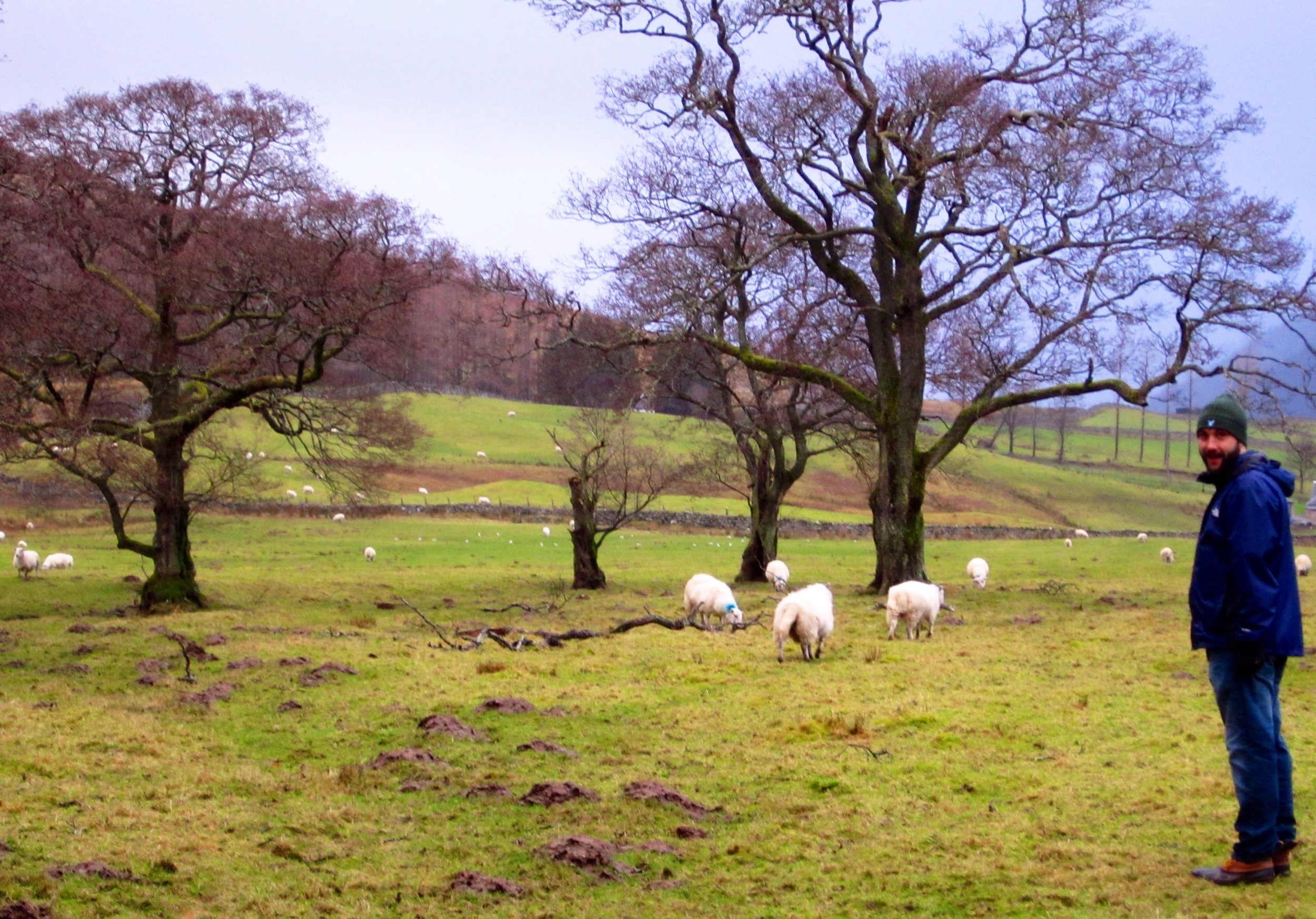 The Scottish Access Code makes for all land to be accessible to walkers, meaning we could walk right up on as many sheep as wedesired - and we did!!