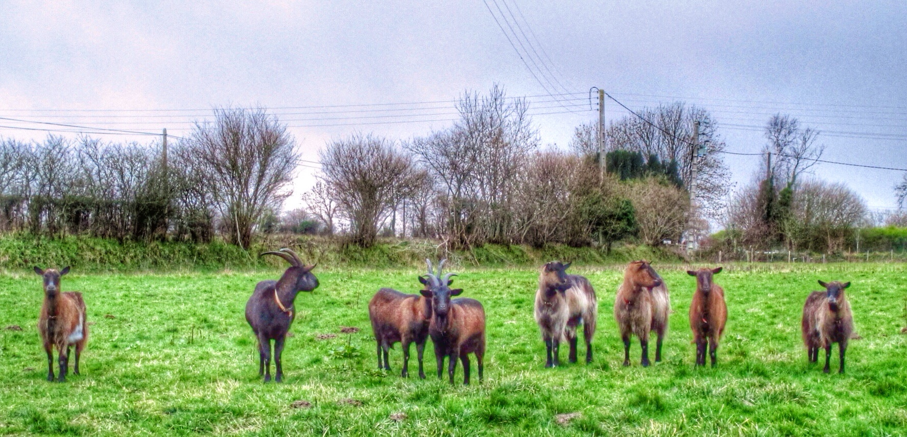 Our new friends (left to right): Dottie, Wilhoughby, Clara, Tatiana, Ronnie, Reggie, Gladys and Peaches
