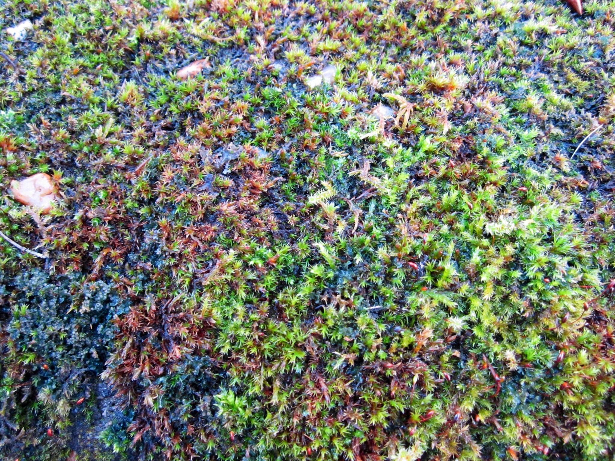 Mossy Rock, Ft William, Scotland