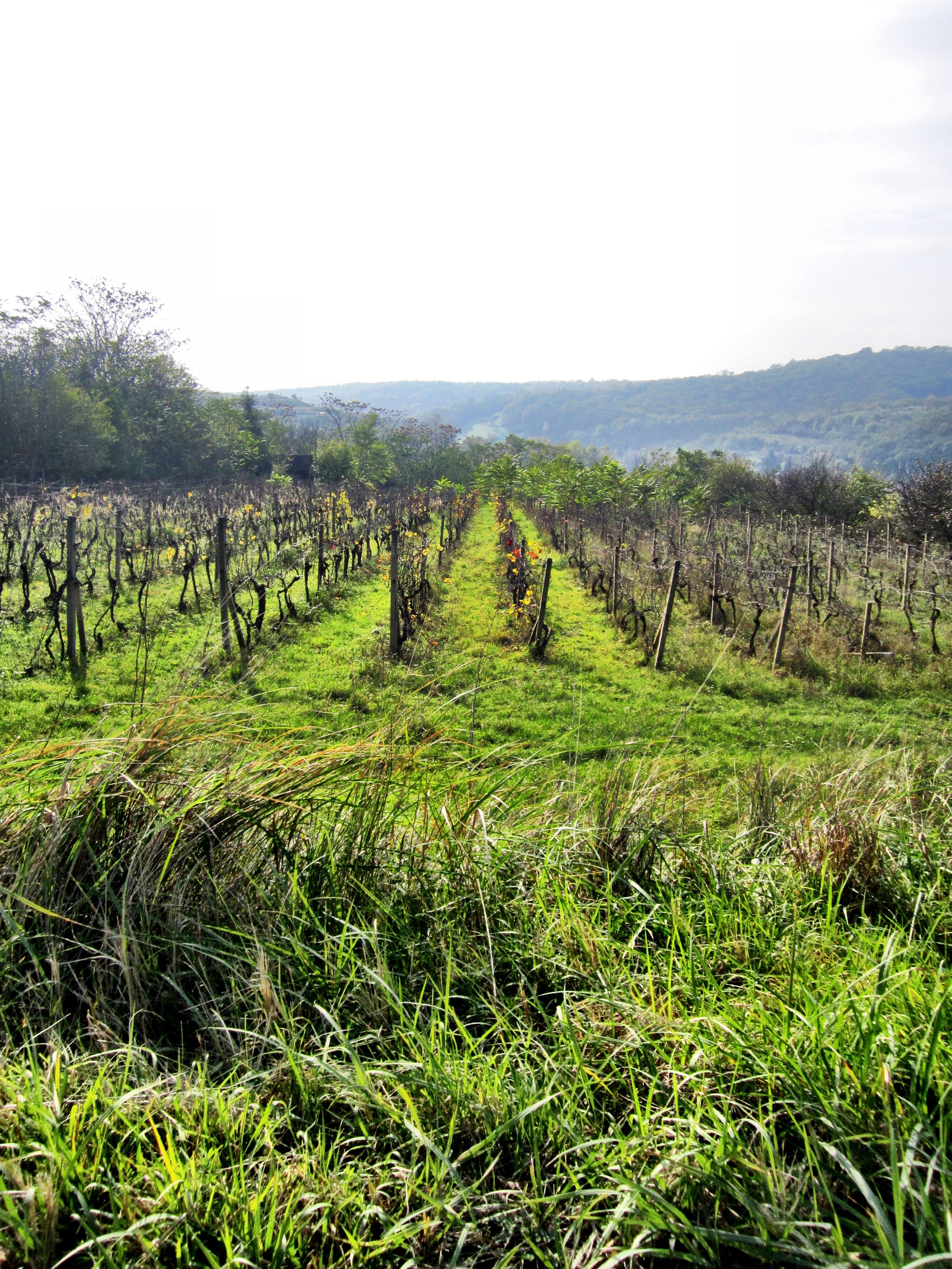 Looking out over the vineyards